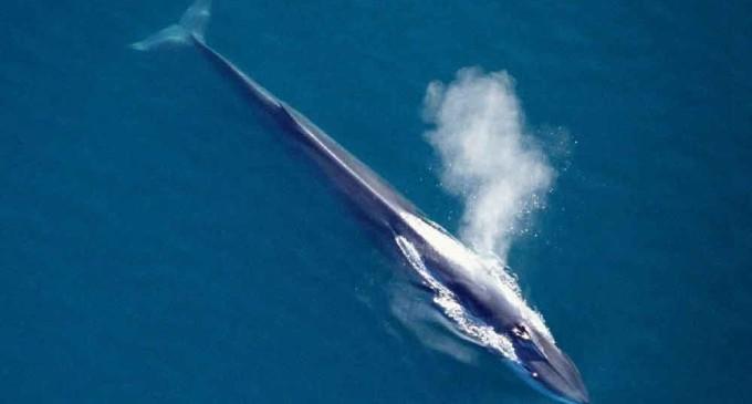 Nuevo santuario para ballenas y delfines en el Mediterráneo