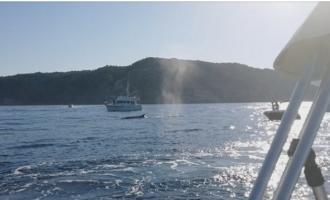 Diverses associacions mediambientals demanen respectar les restriccions durant la navegació que protegeixen els cetacis