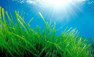 El Club Nàutic Estartit inicia un estudi per valorar l'impacte de la nàutica recreativa a les Illes Medes i a la Costa del Montgrí